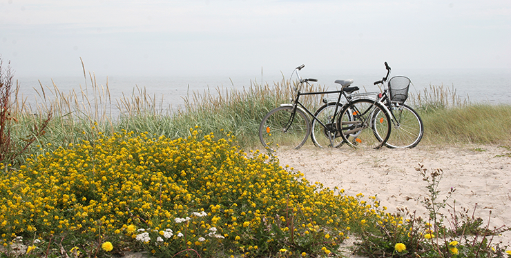 Näsby beach seen from the top of a sand dune. Yellow flowers in the foreground, and a pair of bicycles parked by a path down to the beach.