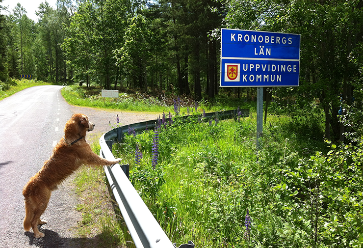"A dog is standing with its front paws on the barrier running alongside a narrow country road. The dog is looking at a road sign that says ""Kronobergs län och Uppvidinge kommun""."
