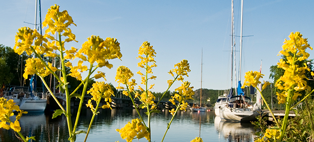 Marina on the Göta River, with flowers in the foreground.