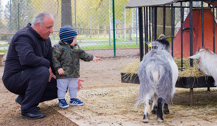 A grandfather with grandchildren looking at goats at the Mini Zoo.